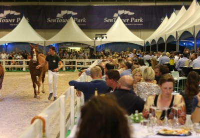 Flanders Foal Auction klaar voor 'Grand Final' op 21 September